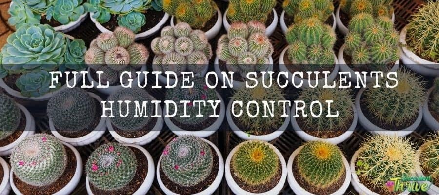 15 Adorable Succulents That Stay Small - Tiny Succulents