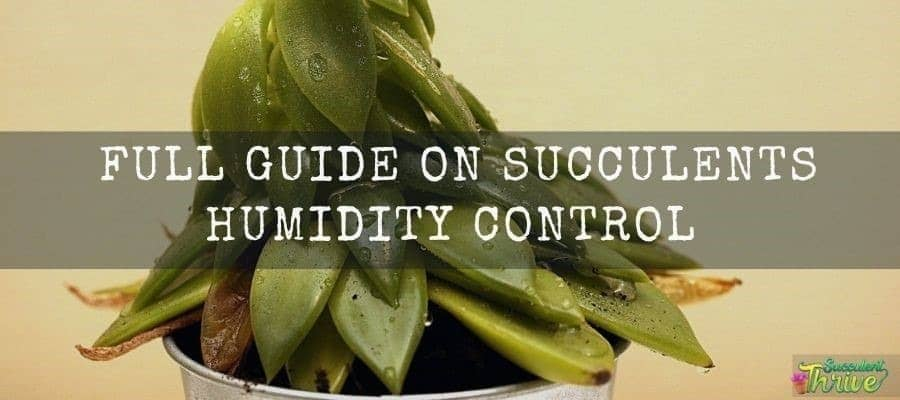 Do Succulents Like Humidity Full Guide on Succulents Humidity Control