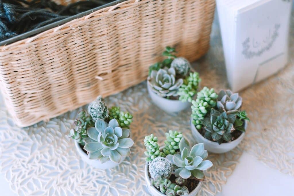 Full Guide on Succulents Humidity Control