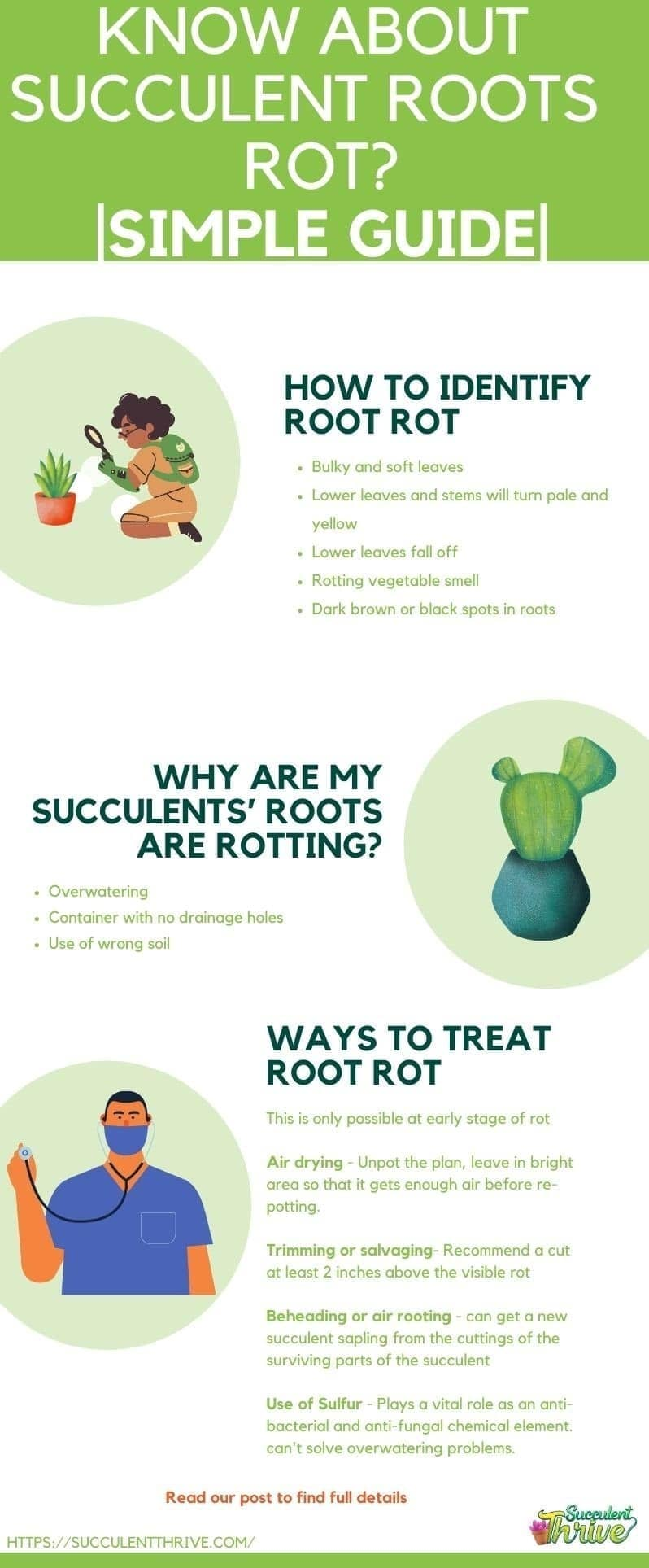 How do I know If My Succulent Roots are Rotting Simple Guide (2)