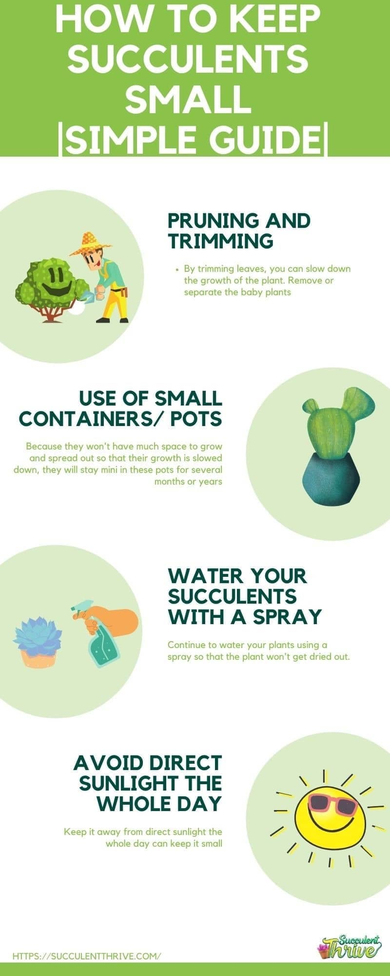 _How to Keep Succulents Small and manageable_ Simple Guide infographic
