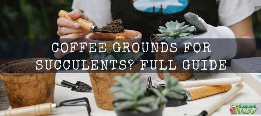 How to Use Coffee Grounds for Succulents
