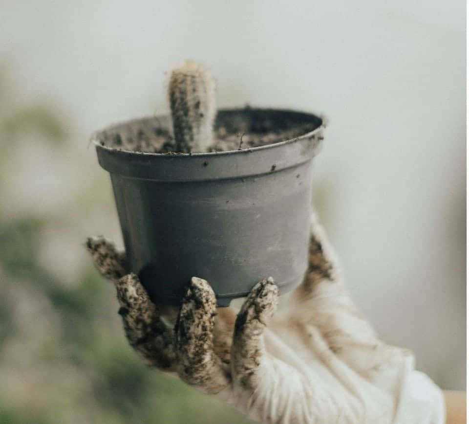 Succulents that Like Coffee