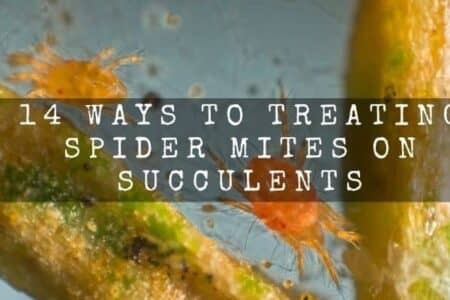 14 Ways To Treating Spider Mites On Succulents