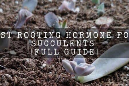Best Rooting Hormone For Succulents   Full Guide