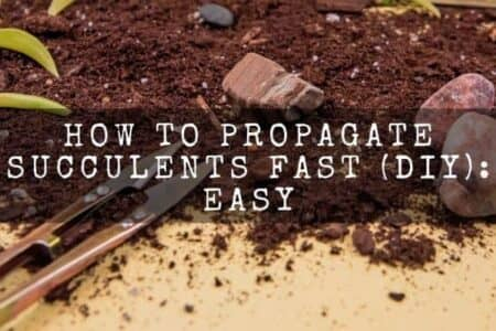 How To Propagate Succulents Fast (DIY): Easy