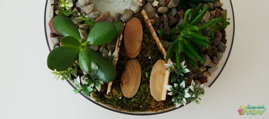 Succulents In Shallow Dishes _