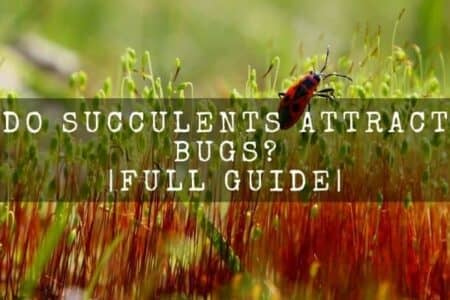 Do succulents attract bugs? 10 thing to know before