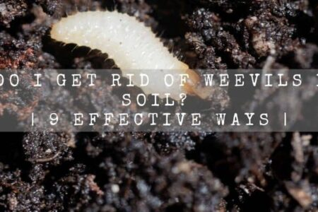 How Do I Get Rid Of Weevils In My Soil? | 9 Effective Ways |