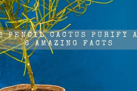 Does Pencil Cactus Purify Air? 6 Amazing Facts