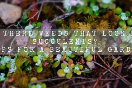 Are There Weeds That Look Like Succulents? | Tips For A Beautiful Garden |