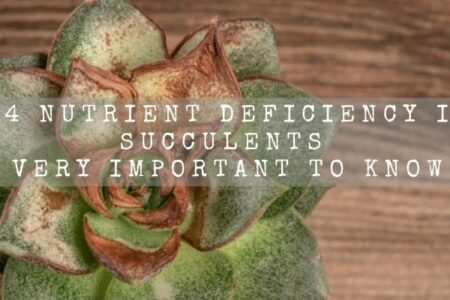 14 Nutrient Deficiency In Succulents | Very Important To Know |