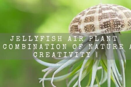 Jellyfish Air Plant | A Beautiful Combination of Nature And Creativity |