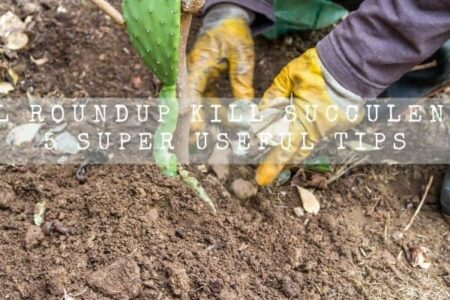 Will Roundup Kill Succulents? 5 Super Useful Tips