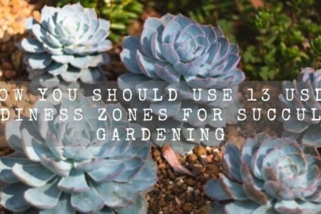 How You Should Use 13 USDA Hardiness zones For Succulent Gardening